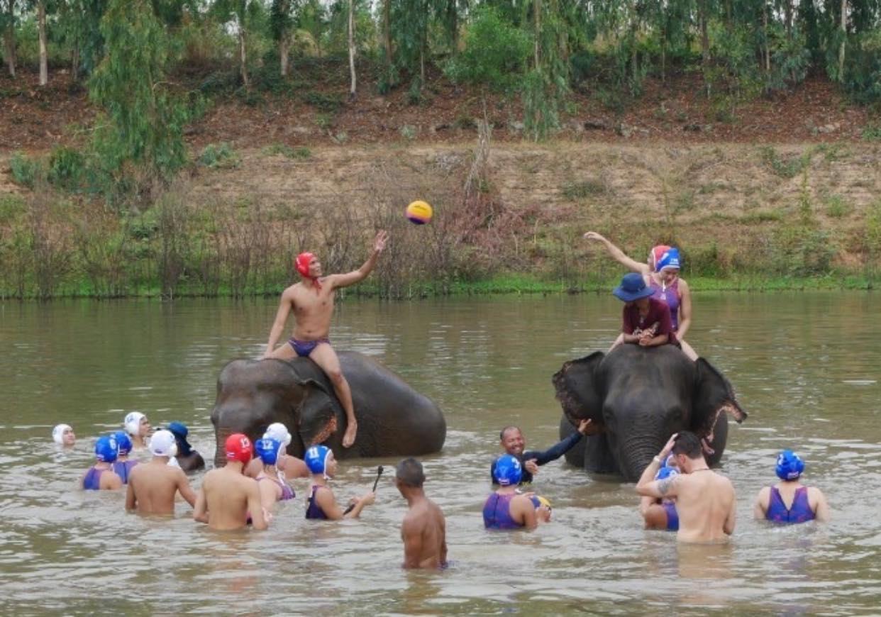 Playing waterpolo... along with elephantsWaterpolo Development World